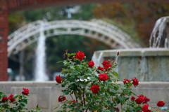 赤いバラと噴水