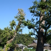 島田雄貴「お寺の樹木 2」