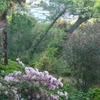 島田雄貴「季節の花」