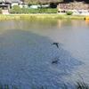 島田雄貴「お寺の池」