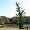 島田雄貴「お寺の樹木 3」
