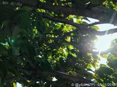 5月の別れ「木々の若葉は強がりだから風の行く流れに逆らうばかり」17:13帰路