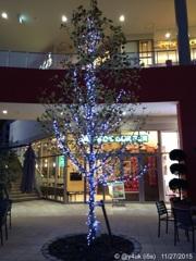 Winter night tree 〜Xmas 2 days more
