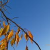青空+紅葉=最高(^^)〜autumn in leaves & blue sky