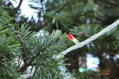 Xmas Tree Red LED 〜夕方のクリスマスツリー木々