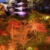 椿山荘 三重塔ライトアップ