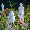 谷津バラ園の三女神