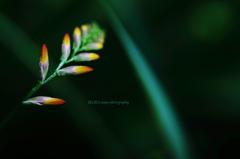 ☆Personality Beauty