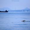 ☆瀬戸内Swimmer