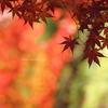 ☆Square Autumn