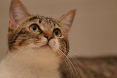 キジトラ1 (猫19)