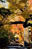 紅葉のかえる寺 Ⅰ