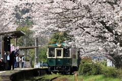 さくらの駅 特別列車 4