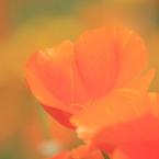 CANON Canon EOS Kiss Digital Xで撮影した(オレンジ)の写真(画像)