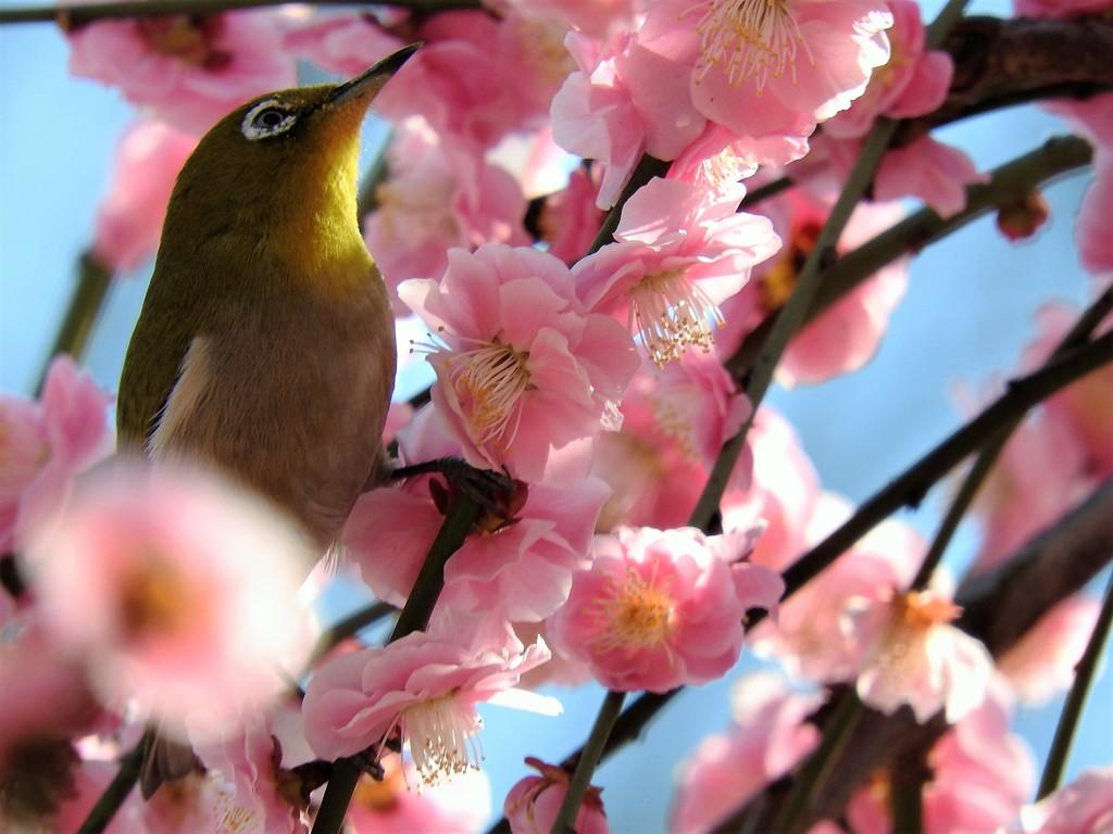 梅花の中で