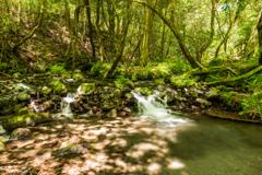 山吹水源の渓流