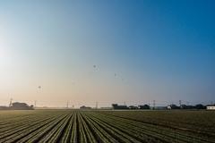 麦畑と気球