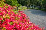 高良山つつじ公園-1