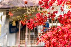 泉山弁財天の紅葉