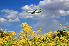 空飛ぶ菜の花