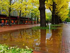 雨上がりの並木