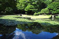 東京の青い池