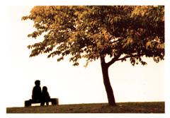 安らぎの人と木