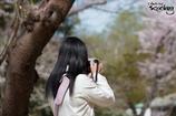 桜色の彼女