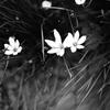 恵比寿の花