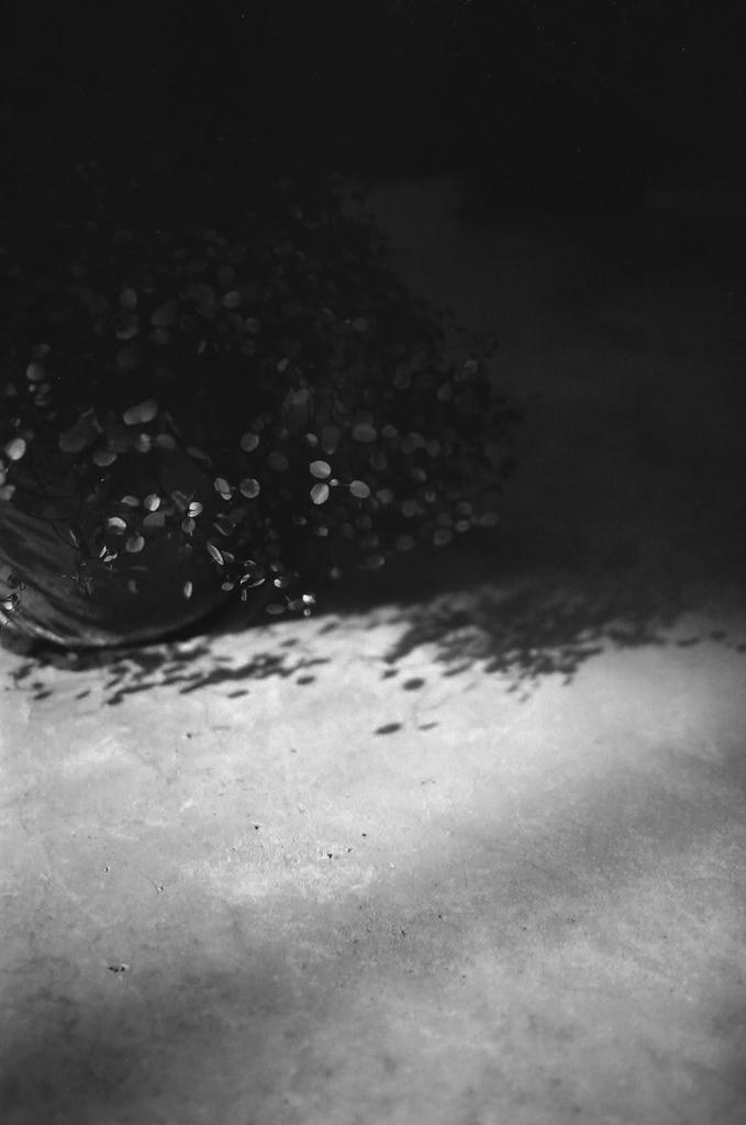 恵比寿の花 その2