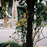 VOIGTLANDER Bessa-R2Mで撮影した乗り物(恵比寿の自転車 その2)の写真(画像)