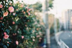 恵比寿の花 その3