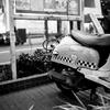 渋谷のバイク