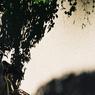 VOIGTLANDER Bessa-R2Mで撮影した乗り物(恵比寿の自転車 その3)の写真(画像)