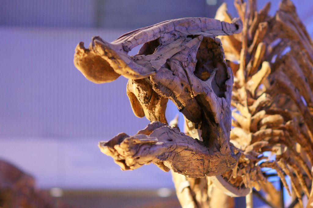 恐竜 その1