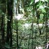 谷戸の森3