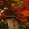 天龍寺 望京の丘