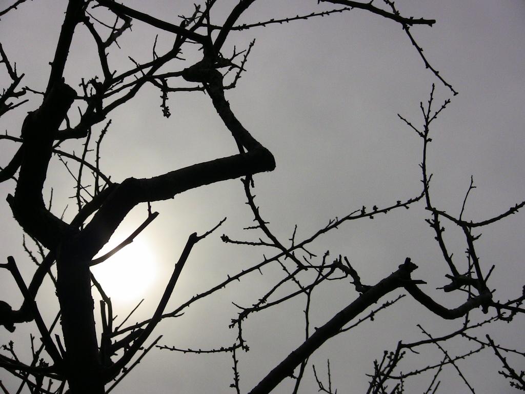 梅なのに冬の訪れっぽい・・・