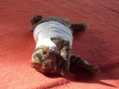 タイ猫 その2