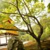 金閣寺と石と木