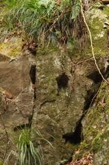 サファリパーク岩