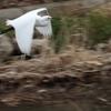 白鷺 (コサギ Part2)