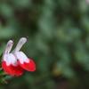 忍法 「魅惑の唇」