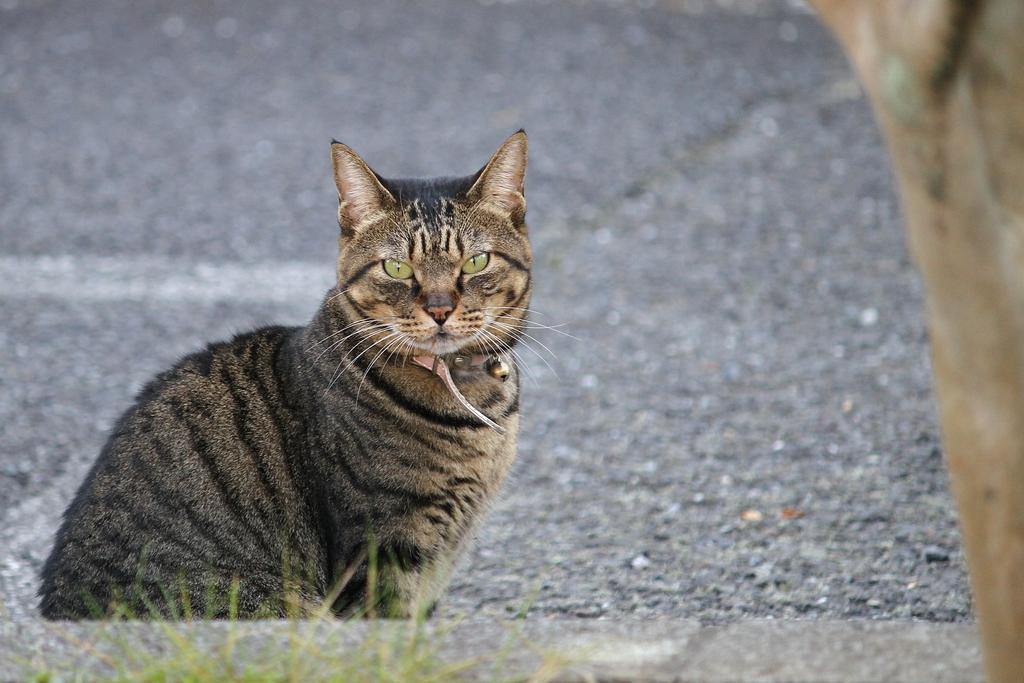猫ですが何か・・・