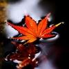 落ち葉の水浴び