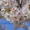 つくばの春 #2