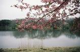 春ノ記憶 #2