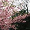 春ノ記憶 #1