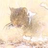 猫 (デジタルフィルタ:ソフト→水彩画)