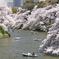 春盛り千鳥ヶ淵2
